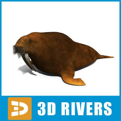 walrus_logo.jpg