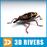 3d model weevil insect