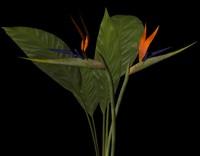 maya plant bird paradise