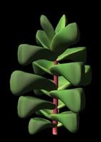 3d cactus crassula cornuta