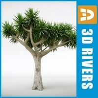 Dracaena draco by 3DRivers
