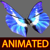 Butterfly Blue Morpho Helena  Rigged & Animated