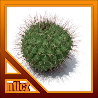 Anticz_Cactus_Thmb_01Brnd.jpg