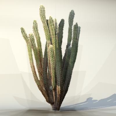 Desert_plant_06_1.jpg