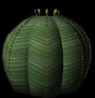 cactus obesa 3d ma
