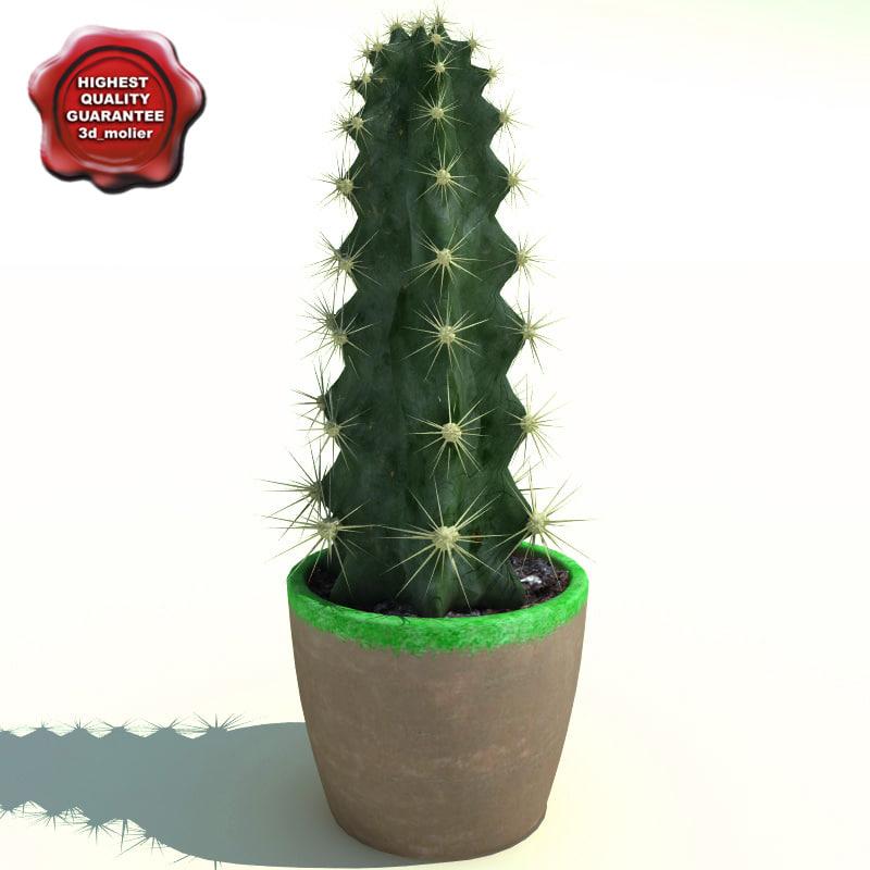 Cactus_Cereus_peruvianus_0.jpg