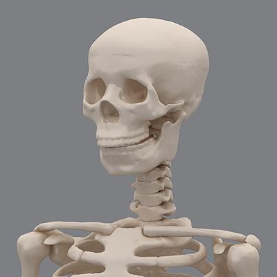 Skeleton-04.jpg