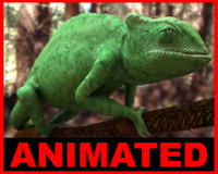 Chameleon - Chamaeleo chamaeleon