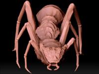 3d ant spider model