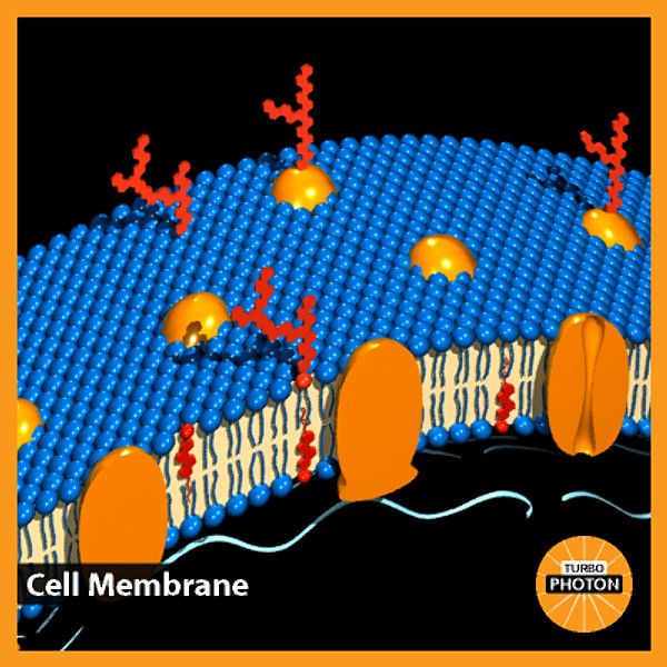 cell_membrane_03.bmp