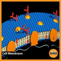 3d cell membrane model