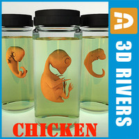 Chicken embryo all in one by 3DRivers