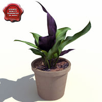 begonia maculata 3d obj