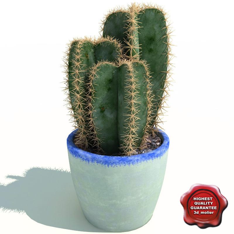 Cactus_Cereus_peruvianus_V2_0.jpg