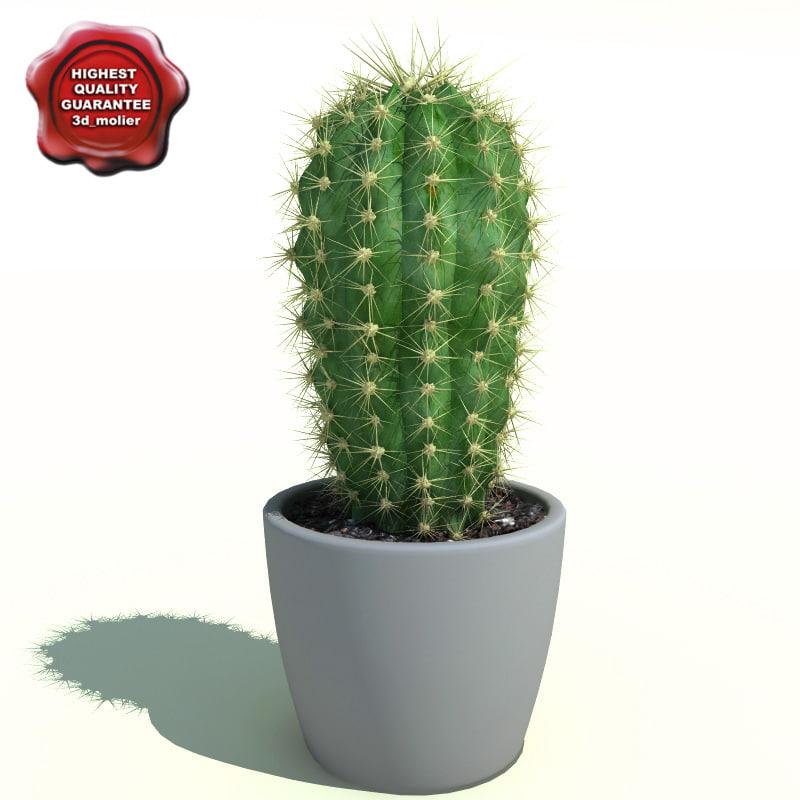Cactus_Cleistocactus_starausii_0.jpg