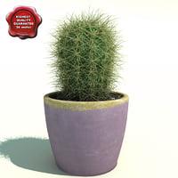 Cactus Oreocereus celsianus