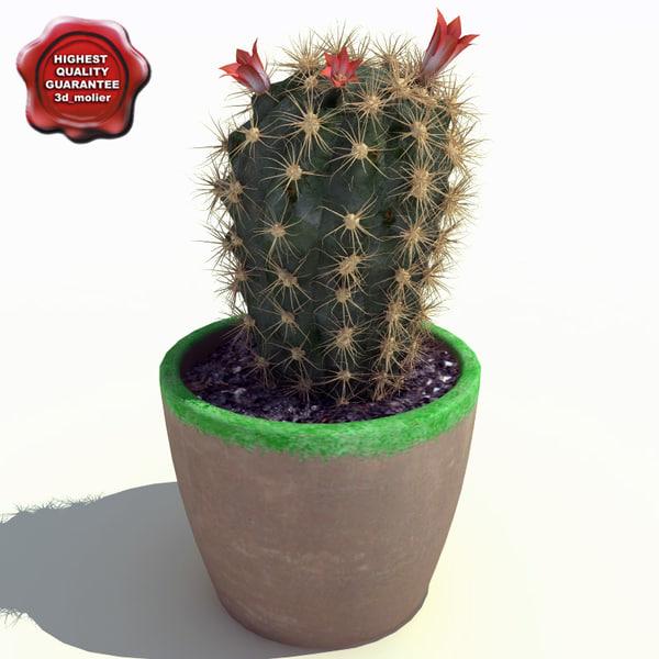 Cactus_echinopsis_eyriesii_0.jpg