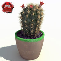 cactus echinopsis eyriesii 3d 3ds