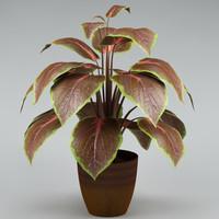 max plant flowerpot