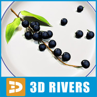 Bird cherry by 3DRivers