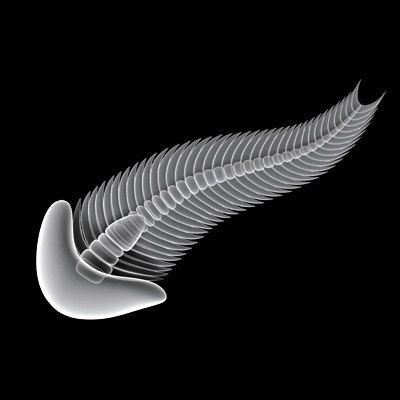 spriggina ediacaran curve 3d model - spriggina... by sgame