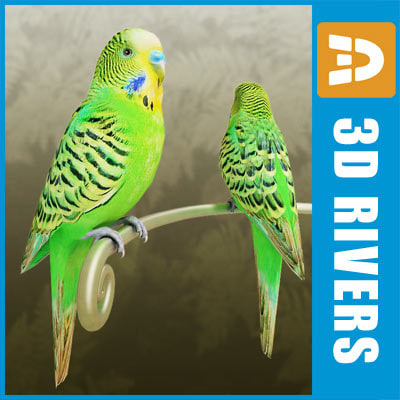 Budgie by 3DRivers
