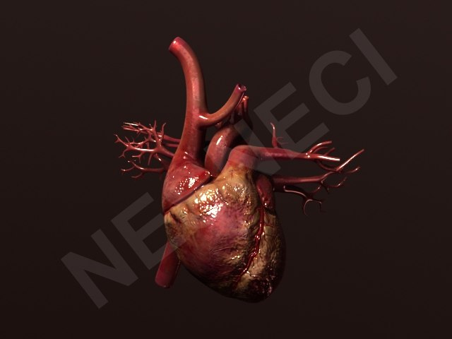 Heart_TurboS_Re_L_1.jpg