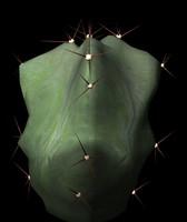 3d cactus lemairiocereus pruinosus