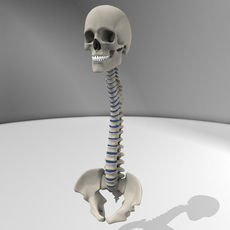 SkullSpine.jpg