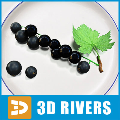 3d black currant - Black currant by 3DRivers... by 3DRivers