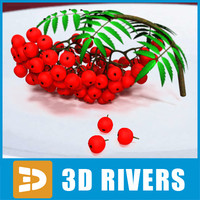 3d model red mountain ash