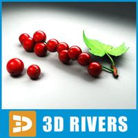 Red currant by 3DRivers