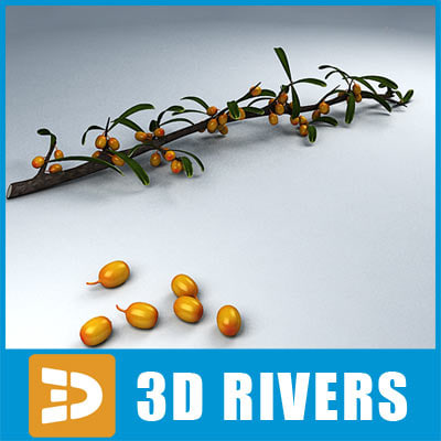 sea-buckthorn_logo.jpg