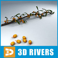3ds sea buckthorn fruit