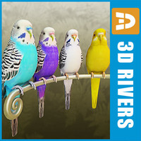 budgies birds parrots 3d max