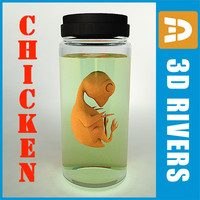 stage chicken embryo obj