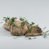 3d plants rocks
