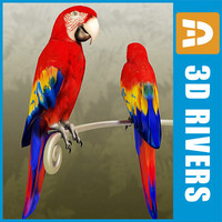 Red macaw by 3DRivers