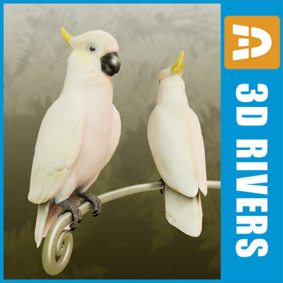 3d model white cockatoo parrot birds - Cockatoo 01 by 3DRivers... by 3DRivers