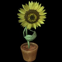 3ds max sunflower flower