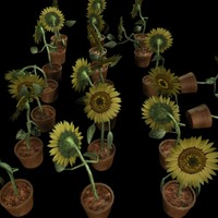 3d sunflowers gardens grass