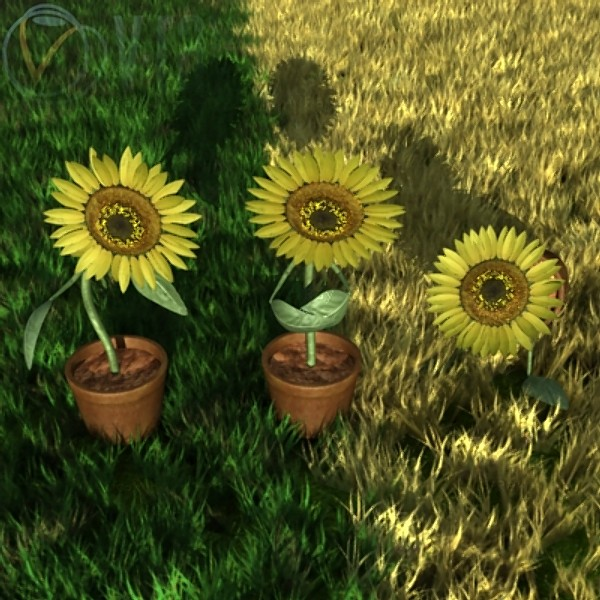 3_sunflowers2.jpg