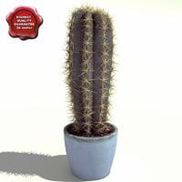 3d model cactus trichocereus candicans