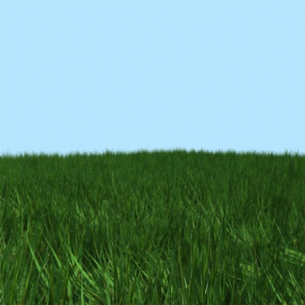grass_green.jpg