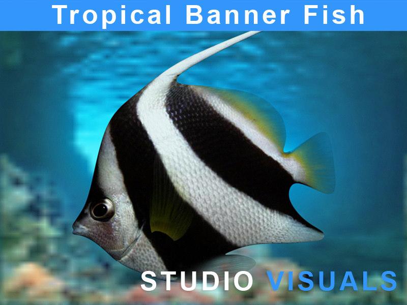 Bannerfish1.jpg
