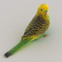 3d budgie color model