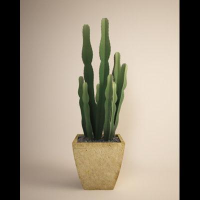 cactus_pic_01.jpg