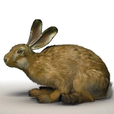 rabbit01.jpg