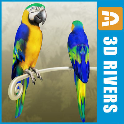 Blue macaw by 3DRivers