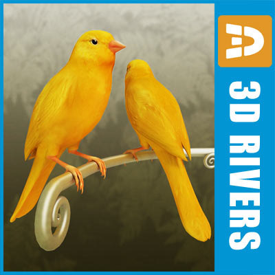 canary_logo.jpg
